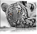 entspannter Tiger schwarz/weiß Format: 100x70 auf