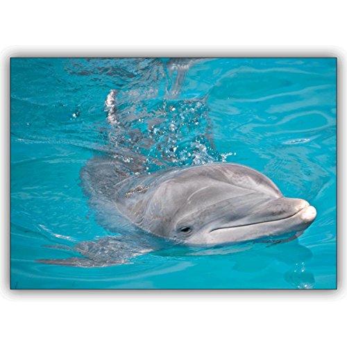 10 Geburtstagskarten: Glücks Tier Foto Grußkarte mit schwimmenden Delfin • edle Gratulationskarten zum Geburtstag mit Umschlägen geschäftlich & privat
