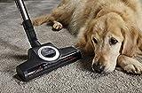 Miele Complete C3 Cat und Dog PowerLine Bodenstaubsauger (mit Beutel, EEK C, 4, 5 Liter Staubbeutelvolumen, 890 Watt, 12 m Aktionsradius, inkl. Turbobürste zu einfachen Tierhaarentfernung) rot