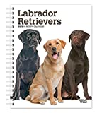 Browntrout Publishers, I: Labrador Retrievers 2020 Diary