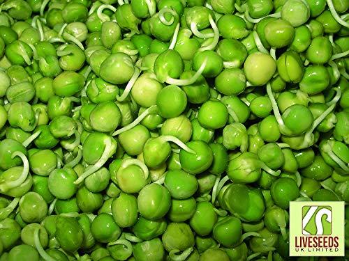 SANHOC Paquet Graines:: Liveseeds - Les graines germées de pois verts Graines / / () SEED