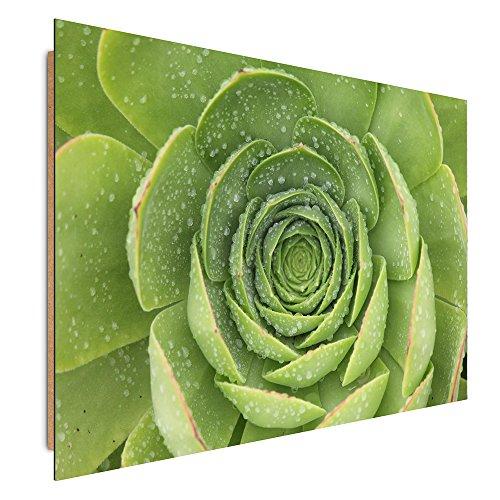 Feeby. Tableau - 1 Partie - 60x30 cm, Décoration Murale Image Imprimée Deco Panel, Plante, Nature, Vert