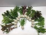 *5 Bund 30 Stängel Aquarienpflanzen Wasserpflanzen