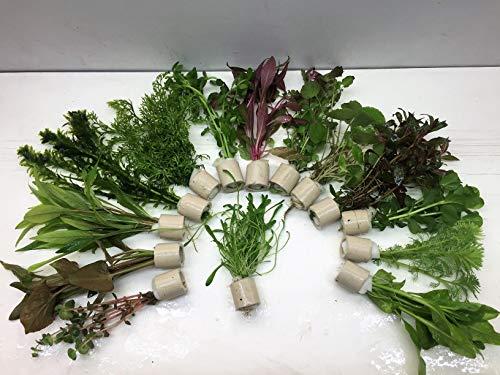 5 Bund 30 Stängel Aquarienpflanzen Wasserpflanzen
