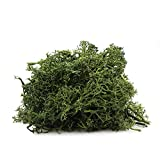 NW Wholesaler Forest Green Preserved Reindeer Moss - 2 oz - Indoor Outdoor for Potted Plants, Terrariums, Fairy Gardens, Arts and Crafts or Floral Decor Design (Green)