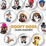 Decorative Magnets for Fridge Funny Dogs – Glass Magnets for Refrigerator – Cute Fridge Magnets for Office and Kitchen – Succulent Whiteboard Magnets for Locker