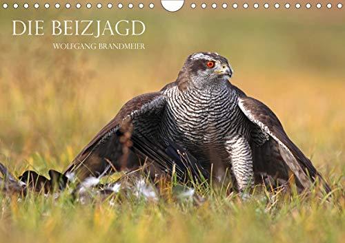 Die Beizjagd (Wandkalender 2021 DIN A4 quer): Falknerei und Beizjagd in Perfektion (Monatskalender, 14 Seiten ) (CALVENDO Tiere)