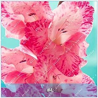 GEOPONICS Semillas: ZLKING 1 PC 15 tipos de bulbo gladiolo flor no Gladiolo fresco de alta germinación Tasa fácil de cultivar orquídeas Bonsai: 4