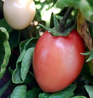 Thai Pink Egg Tomato 15 Seeds - Heirloom from Thailand by AchmadAnam