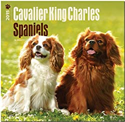 Cavalier King Charles Spaniels 18-Month 2015 Calendar[Browntrout Publishers][Amazon]