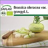 SAFLAX - BIO - Cavolo rapa - Superschmelz - 20 semi - Brassica oleracea var. gongyl. L.