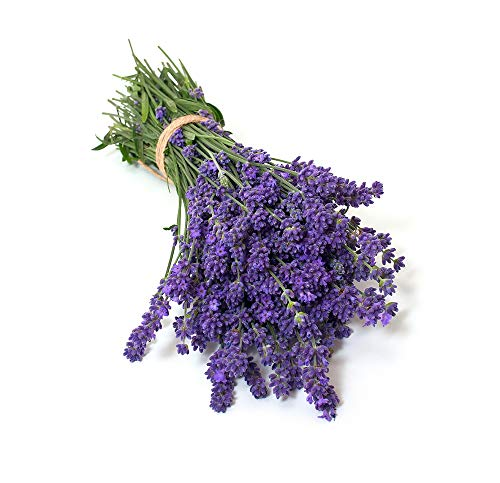 David's Garden Seeds Herb Lavender Munstead Type 9432 (Purple) 200 Non-GMO, Heirloom, Seeds