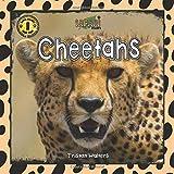 Safari Readers: Cheetahs (Safari Readers - Wildlife Books for Kids)