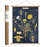 Cavallini Papers & Co. Cavallini Vintage Dandelion Hanging Poster Kit, Multi...