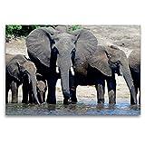 Calvendo Premium Lienzo 120 cm x 80 cm horizontal, un motivo del calendario de animales de las Rüsseltiere – Elefantes africanos imagen sobre bastidor. Lienzo con diseño de animales