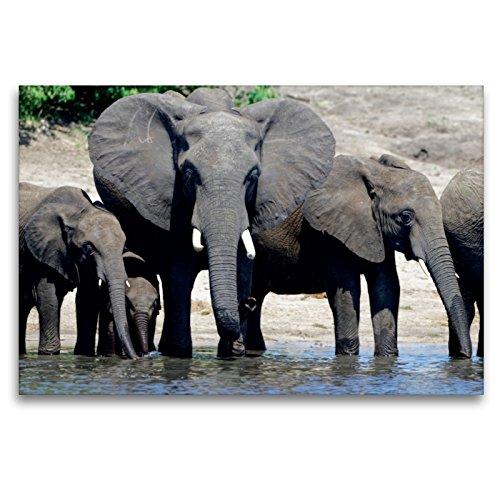Premium - Lienzo textil (120 x 80 cm, horizontal), diseño de elefantes africanos Lienzo impreso, diseño de CALVENDO Animales