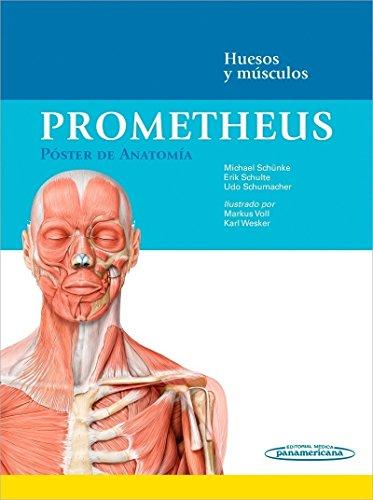 Prometheus. Poster de anatomia: Huesos y músculos