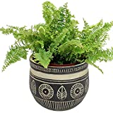 Macetero macizo de 18 cm de diámetro x 15 cm de alto, de cerámica, negro/beige, maceta para plantas