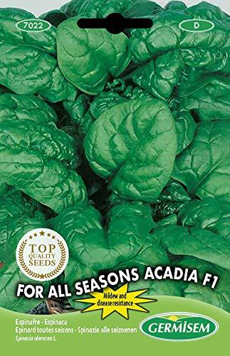 Germisem For All Seasons Acadia F1 Semillas de Espinacas 8 g, EC7022