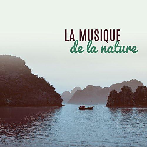 Méditation Ambiance Nature