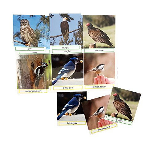 Keeping Busy Bird Groups Match The Photos - Engaging Activity for Dementia and Alzheimer's