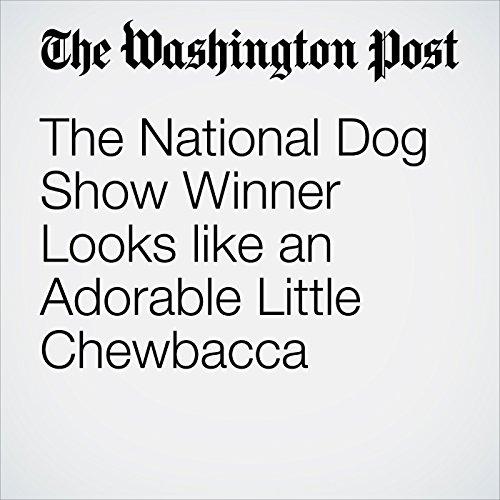 The National Dog Show Winner Looks like an Adorable Little Chewbacca copertina