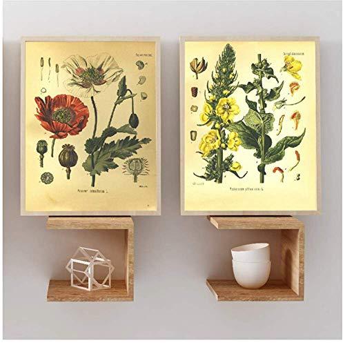 XingChen Kunstplakat Vintage Botanik Drucke Poster Wandkunst Leinwand Gemälde 1887 Heilpflanzen Enzyklopädie Poster Wohnkultur 2x60x80cm ohne Rahmen