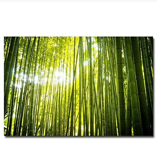 zhaoyangeng bosweg bamboe Sunbeam Art canvas poster afdrukken wandafbeeldingen woonkamer decoratief - 60X80cm zonder lijst