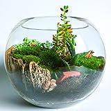 Concretelab&co Kit de terrarium avec bocal rond en verre transparent fait main et mousse pour jardin de fleurs miniature d'intérieur avec cactus, bonsaï 19 cm