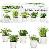 Window Garden Self Watering Herb Starter Kit - Easily Grow Seeds to Live Fresh...