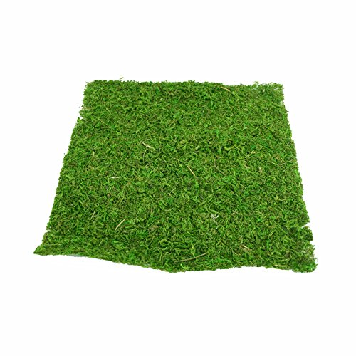 FloristryWarehouse - Foglio di muschio, verde naturale, 38 cm, quadrato