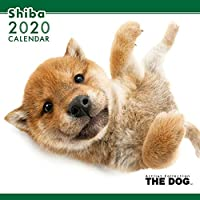 2020年 THEDOGカレンダー シバ