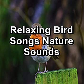 Relaxing Bird Songs Nature Sounds