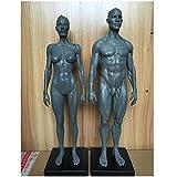 Anatomia Umana Figura - 11.8 Pollici Maschio Muscolare Bone Model - Muscolo Umano Scheletro Modello anatomico - Domanda Artista, Scuola Studio e di insegnamento,Combination