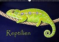 Reptilien (Wandkalender 2022 DIN A3 quer): (Mein) leben im Terrarium (Monatskalender, 14 Seiten )