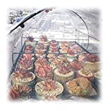 GZHENH Transparente Lona De Protección CLORURO DE POLIVINILO Agujero De Metal Resistente A La Rotura Cobertizo De Plantas Al Aire Libre Lona De Protección, 24 Tallas (Color : Clear, Size : 3x6m)