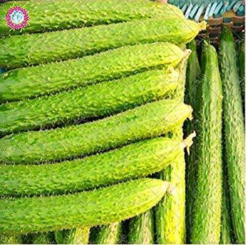 VISTARIC Coriandre Herb graines vertes Healthiy bio aux herbes légumes Graine Rare Bonsaï Facile Growing jardin Plantes ornementales 100 Pcs
