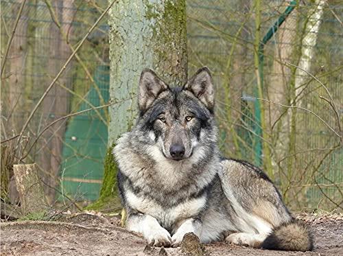 Adultos Rompecabezas Animal Nature Predator Wildlife Park Madera Rompecabezas Decoración para El Hogar-500 Piezas