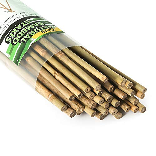Pllieay 25 Pieces Bamboo Stakes Garden Stakes for Indoor and Outdoor Gardening Plant Supports, 2 Feet
