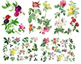 Large Wall Stickers Vintage Roses Flowers by Redoute Removable Real Size Vinyl Colorful Wall Decals