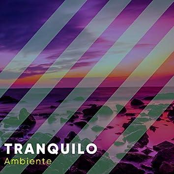 # 1 Album: Tranquilo Ambiente