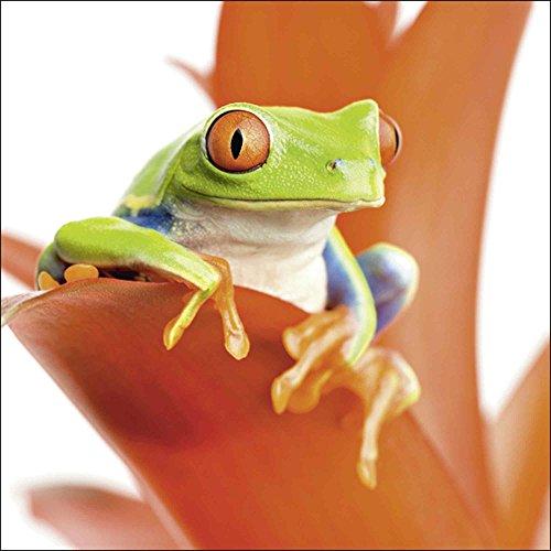 Artland Qualitätsbilder I Glasbilder Deko Glas Bilder 30 x 30 cm Tiere Wassertiere Frosch Foto Orange A6KX Frosch auf seinem Thron