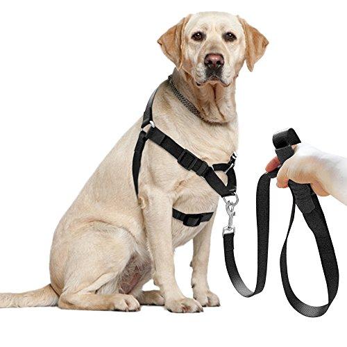 Set de correa y arnés para perro Berry no-pull de nailon para facilitar los paseos, entrenamientos, escaladas y senderismo