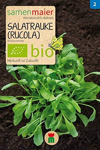 BIO Salatrauke (Rucola) (Rucola coltivata)