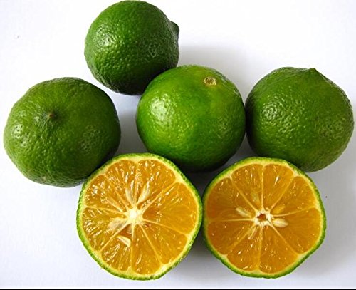 Golden Delicious orange semences Mini Potted arbres fruitiers Graines Bonsai Intéressant Plante 50 particules/lot 9