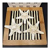 YLHXYPP Sin Grietas 3pcs 8-9 cm Fiesta de la Boda Acuario Natural Craft Shell Artificial Sea Star Fish Adornos Estrellas de mar Conchas únicas (Size : 8 9cm)