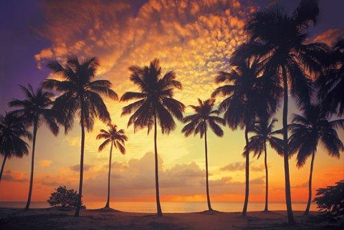 Fototapete Palmenstrand im Abendrot - Größe 388 x 270 cm, 8-teilig, 8-teilig
