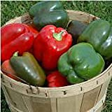 Lady Bell Sweet Peppers Seeds (((100 Seed Packet))) (More Heirloom, Organic, Non GMO, Vegetable, Fruit, Herb, Flower Garden Seeds at Seed King Express)