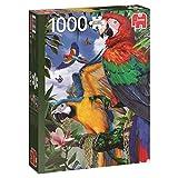 Jumbo- Hermosos Loros, Puzzle de 1000 Piezas (618330)