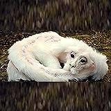 """Falkor da La storia infinita, Falkor il drago fortuna peluche animale bambola decorativa, volando cane-come il drago fortuna ripieno (50cm(20""""))"""